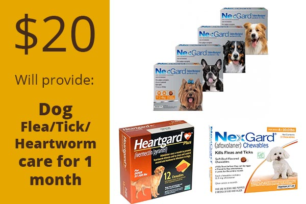 dog-flea-tick-hearthworm-care-hollow-creek-farm
