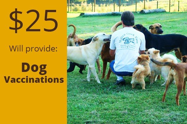 dog-vaccinations-hollow-creek-farm