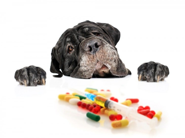 veterinary-care-and-supplies