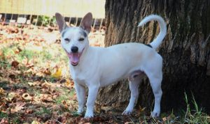 outh-carolina-dog-for-adoption